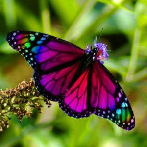 Κρυσταλλοθεραπεία και Πεταλούδα