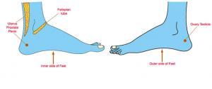 Ρεφλεξολογία και τόνωση της λίμπιντο