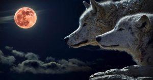 Πανσέληνος στο Λέοντα – Το Ματωμένο Φεγγάρι του Λύκου